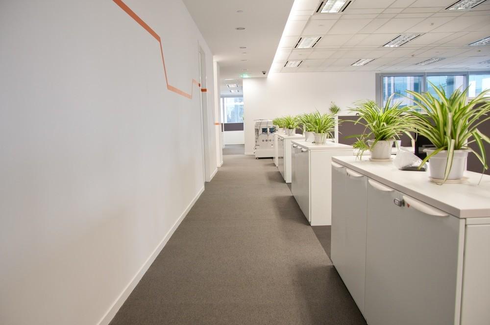 standaard kantoorplanten
