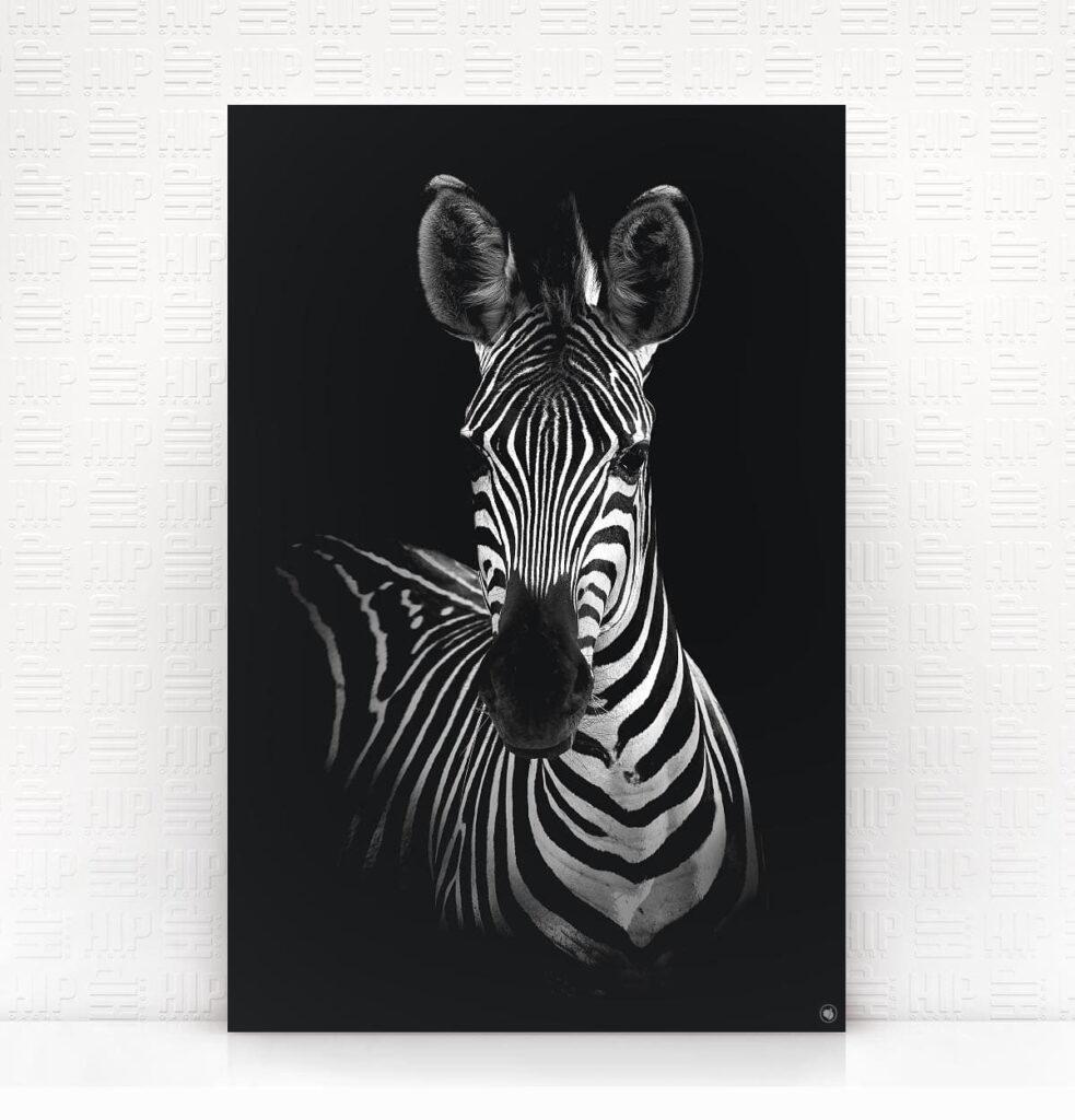 Wanddecoratie Schilderij Zebra Dibond