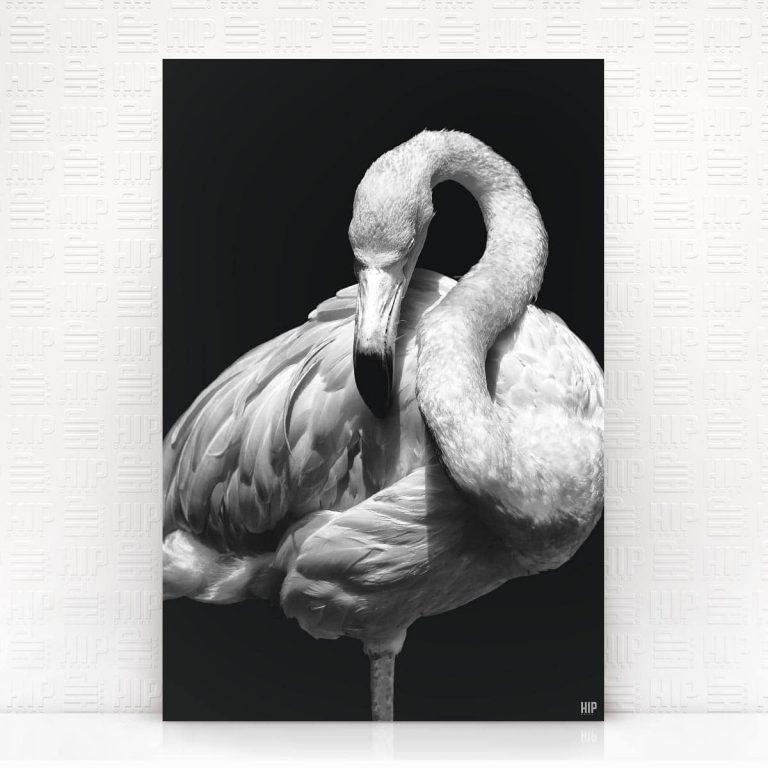 Wanddecoratie Schilderij Flamingo Dibond