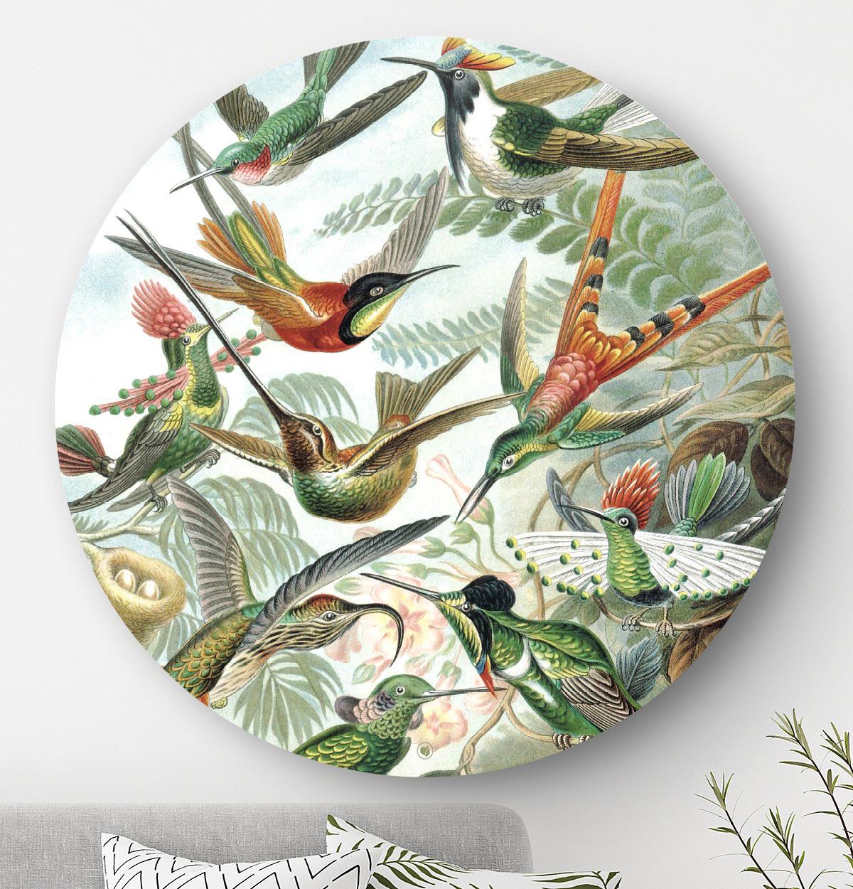 HIP ORGNL muurcirkel Kolibries