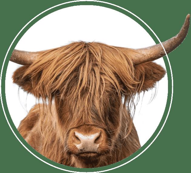 Hip Animal Bull