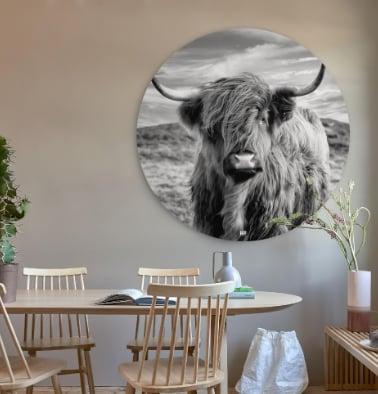 Maat & Advies Cow