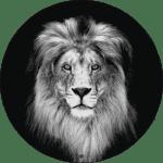 Animals collectie HIP