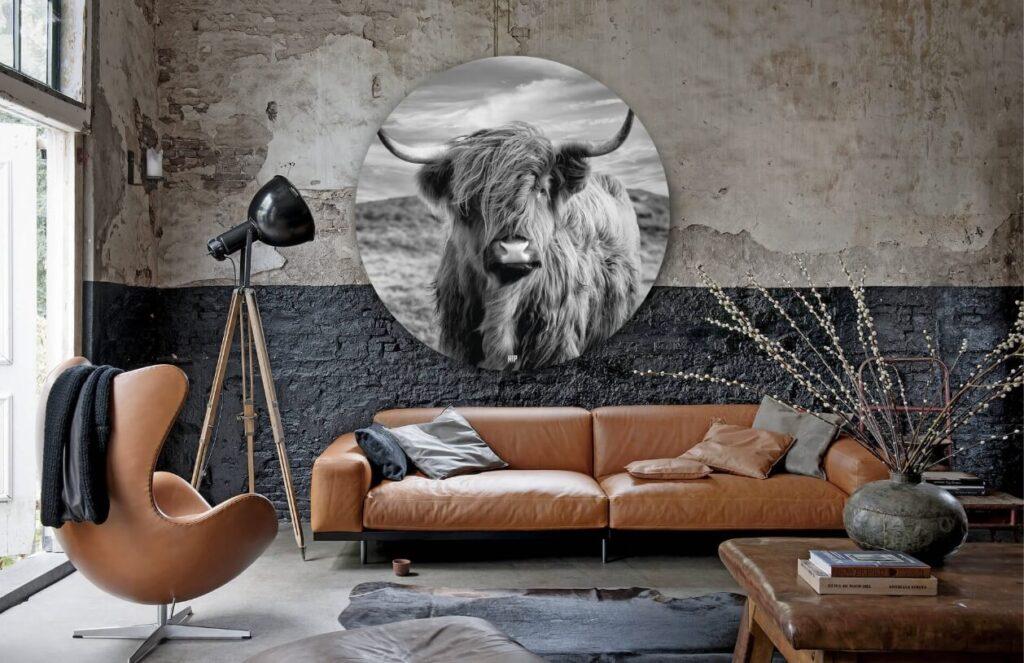 Higlander Cow