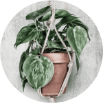 Plantology collectie HIP