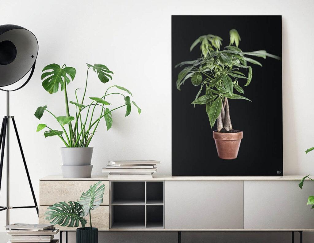 Een grijze tv-meubel met een zwarte wanddecoratie erboven van een plant en zijn er omringende planten.